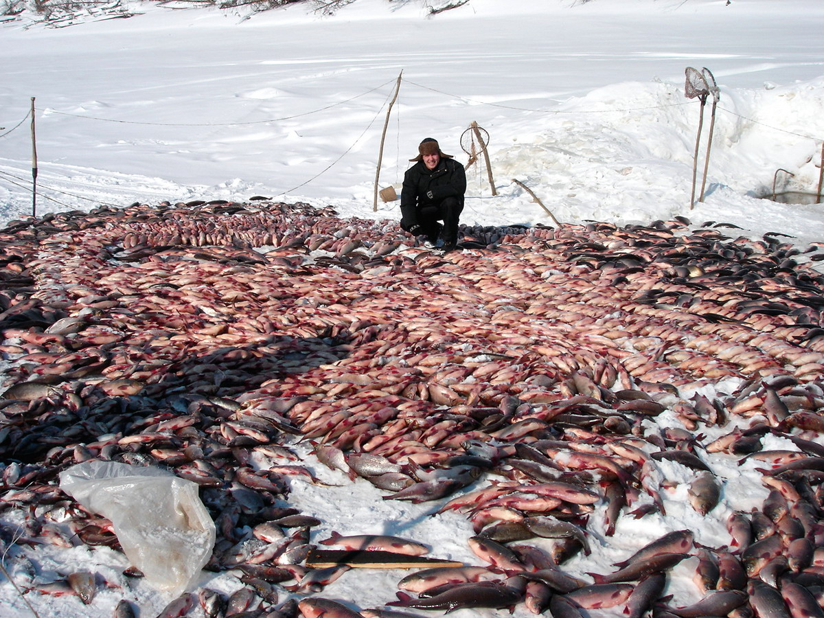 рыбу ловят в лунке