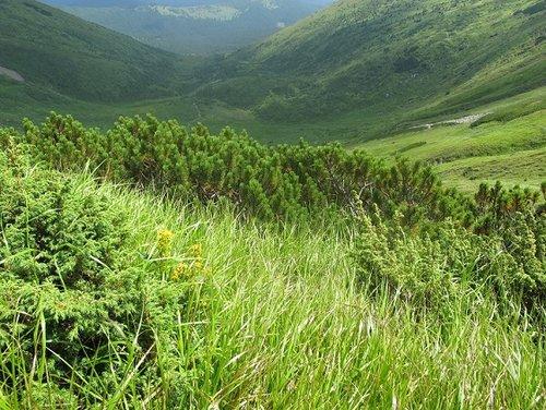 Штурм Говерлы — самой высокой горы Украины…