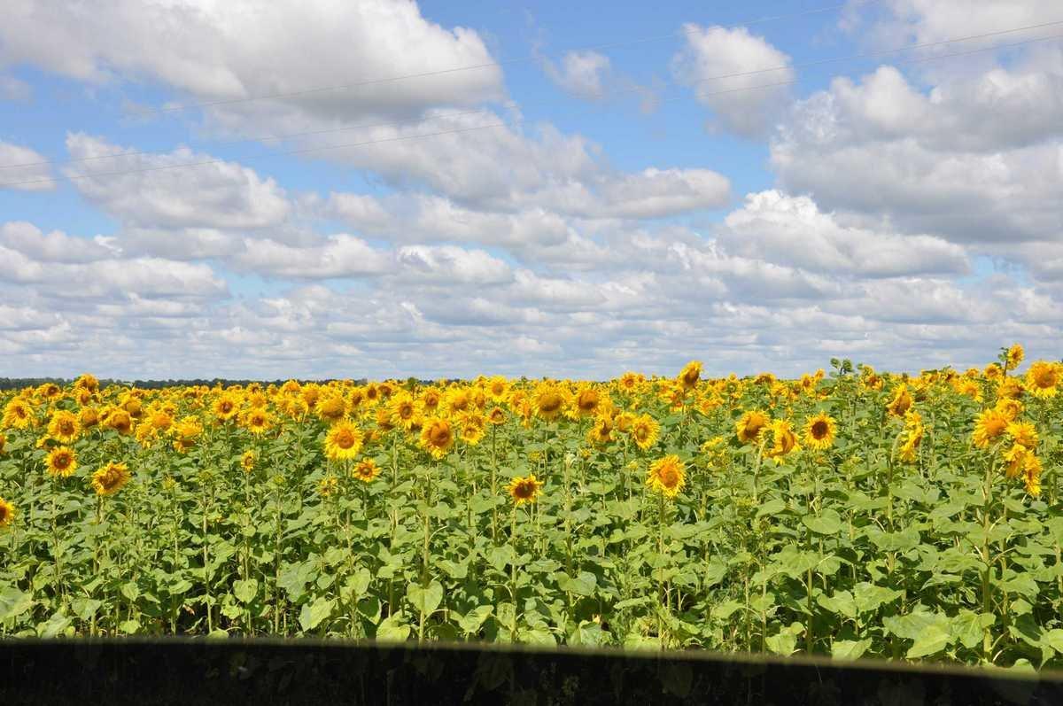 Тетки в поле 8 фотография