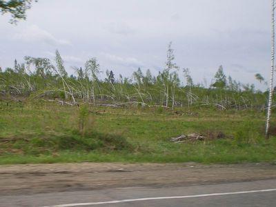 Последствия урагана, прошедшего несколько лет назад в Томь-Обском междуречье