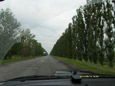 Пирамидальные тополя вдоль украинских дорог