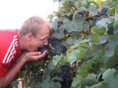 Виноградники.