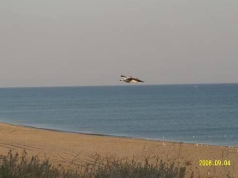 Море и пляж по «соседству»