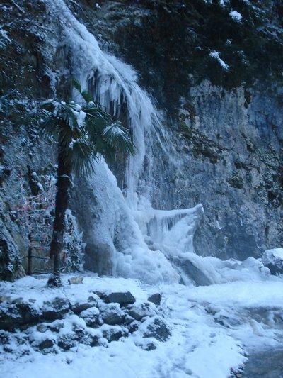 Водопад и пальма.