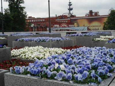 Цветы возле храма.