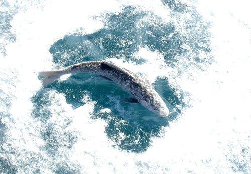 Love is… рыбка, большая и маленькая.