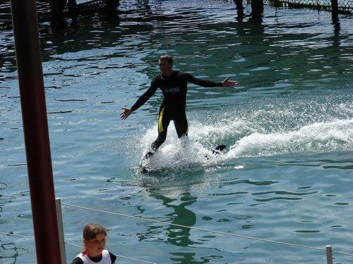Серфинг на дельфине.
