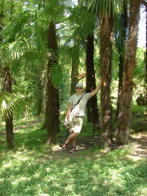 Растет очень много разнообразных пальм.