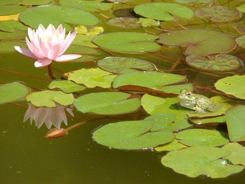 Встречаются пруды с квакающими лягушками.
