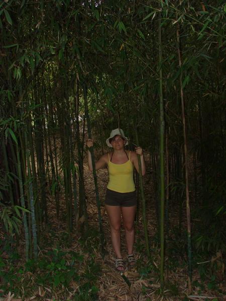 И рощицы живого бамбука.