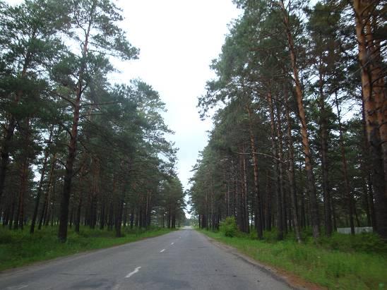 Дорога Свободный – Углегорск.