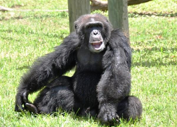 Животные в американских зоопарках содержатся в максимально приближенных к естественным условиях, имеют весьма жизнелюбивый вид и охотно тянутся к человеку