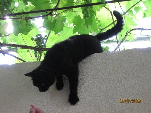 Кошка, гуляющая сама по себе :).