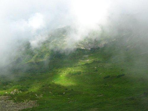 Напомнило Альпийские луга.
