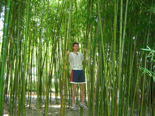 Полез на бамбук.