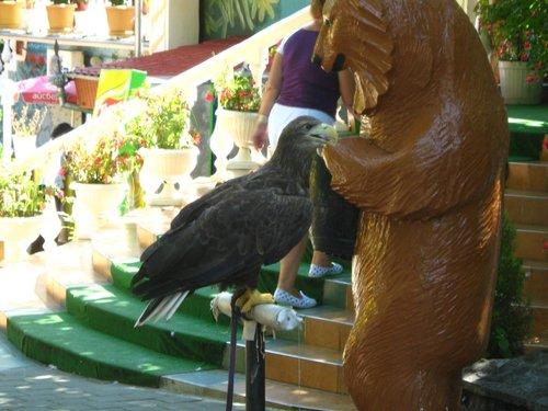 Орёль.
