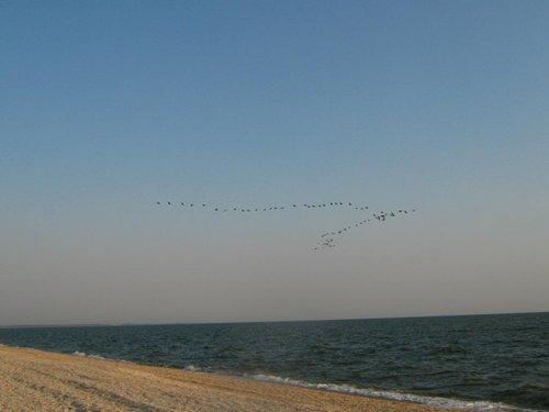 Птицы уже куда-то летят, наверное на юг, хотя по направлению на север…непонятно.