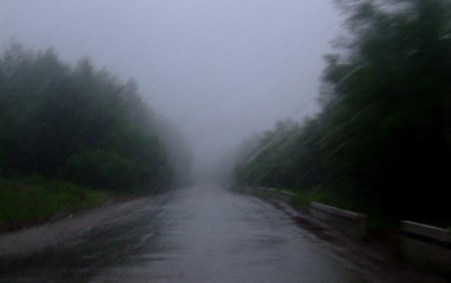 Весь день шел дождь.