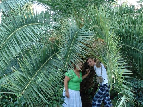 Огромные пальмы.