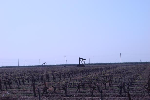 Повезло человеку – тут тебе и виноградники, и «черное золото»…