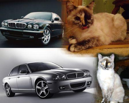 Jaguar XJ 2010 - отзыв владельца