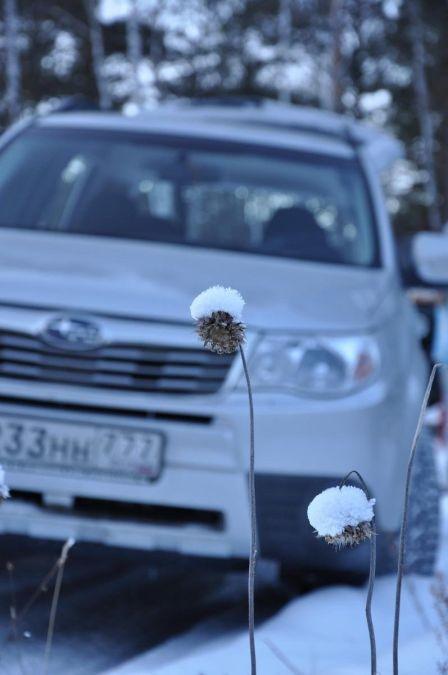 Subaru Forester 2010 - отзыв владельца