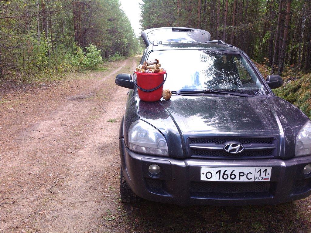 За грибами можно теперь ездить чуток подальше))