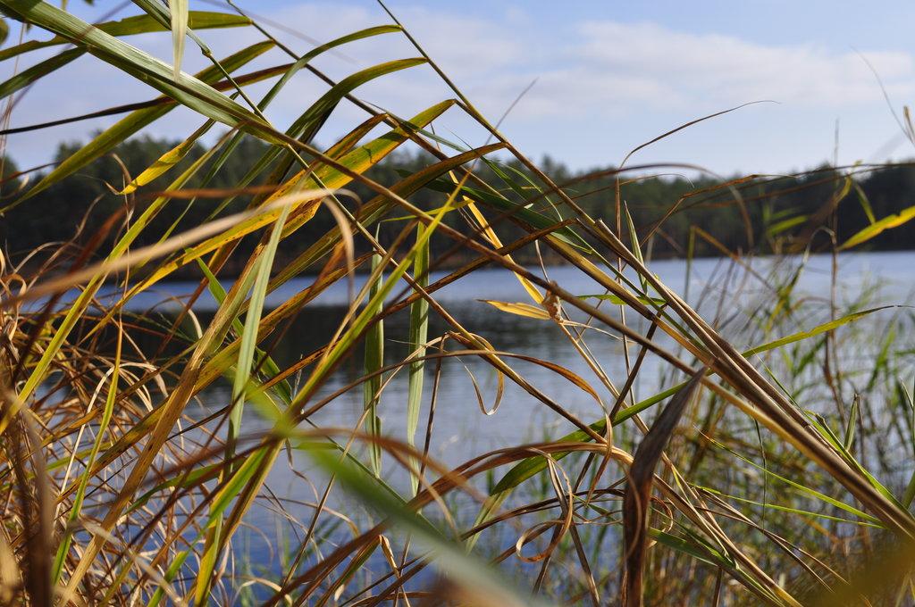 """Как мне сказали, именно на этом озере проводились съемки фильма \""""Мы из Будущего\"""", где они ныряли..."""