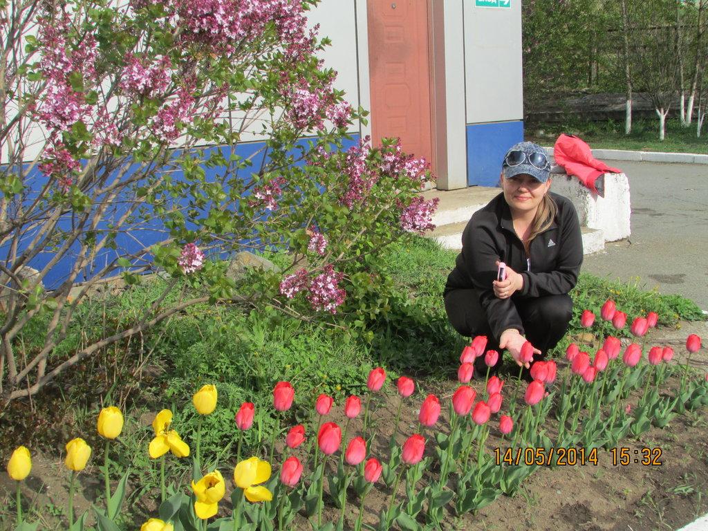Тюльпаны у отеля