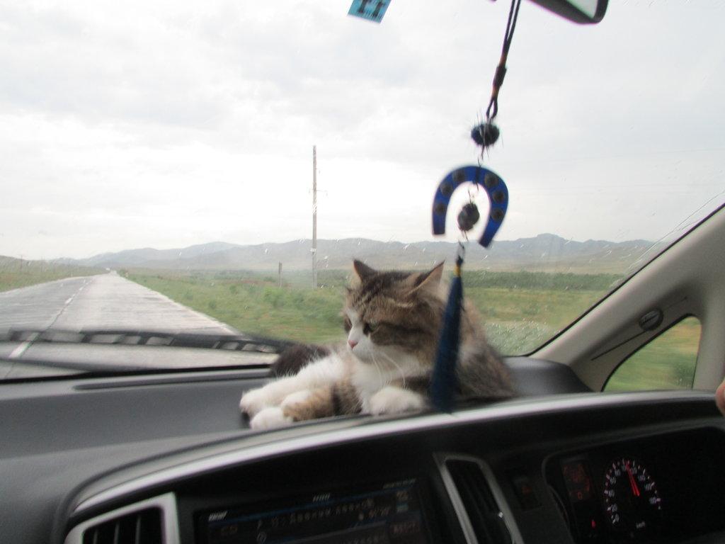 У нашей Люси теперь это любимое место в машине