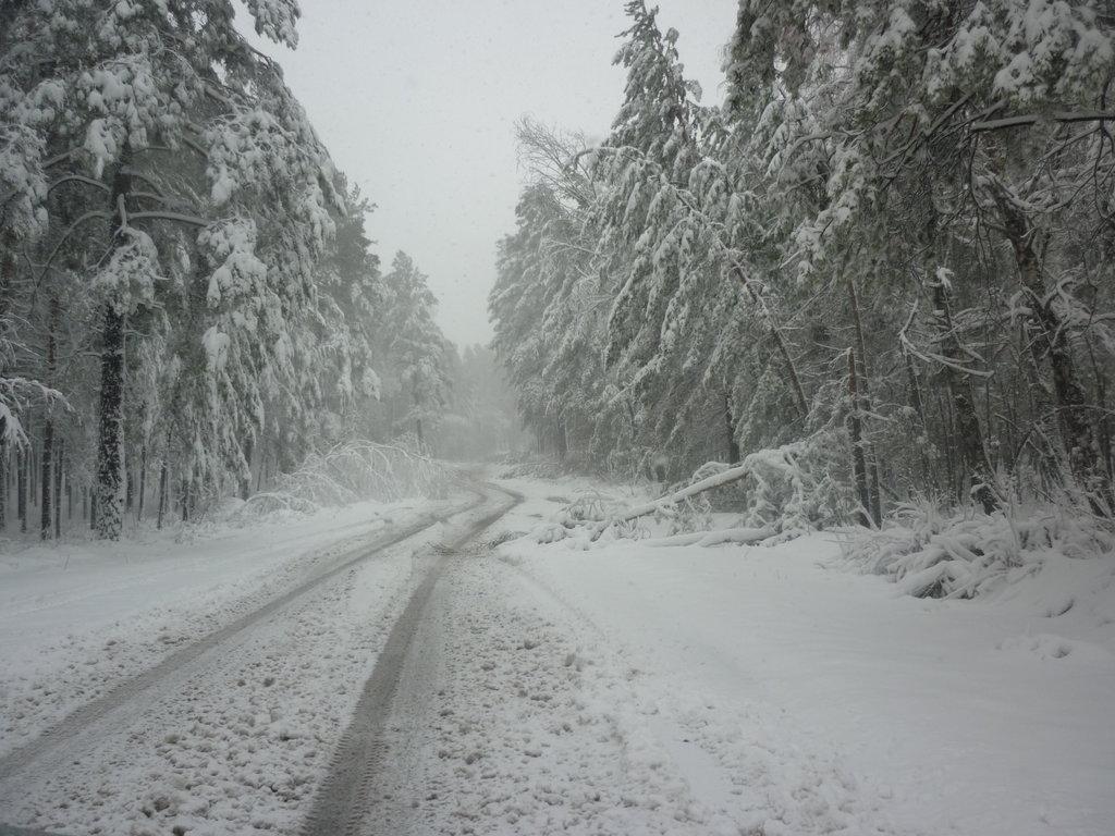 После снегопада в апреле 2011 г.