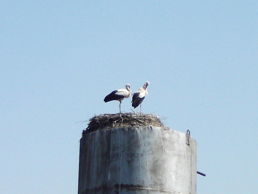 А это семейная пара белорусских аистов на водонапорной башне.