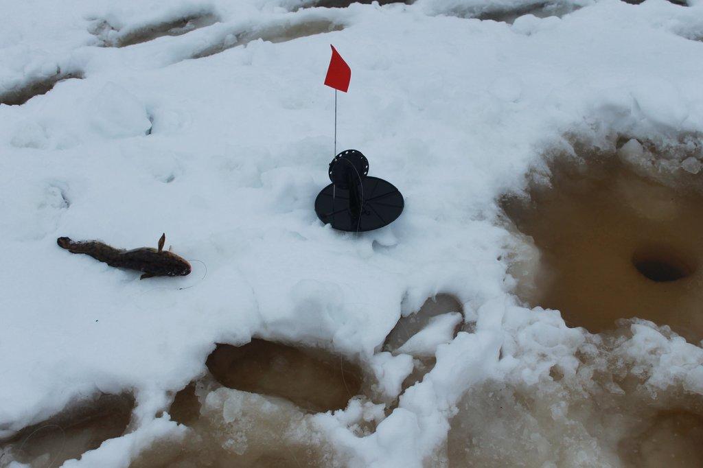 Заготовки из перезрелых огурцов на зиму