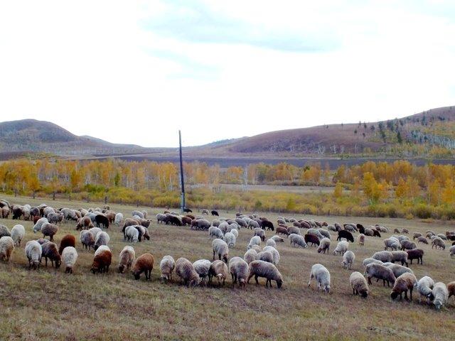 31Как сделать перевернутую овцу