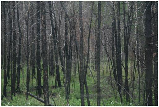 Трах завез бабу в лес порно видео обнажение