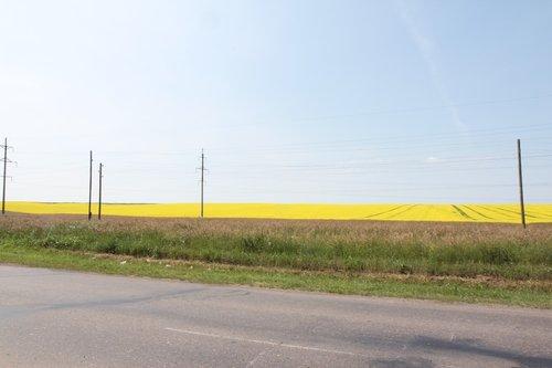 Проезжали очень красивое ярко-желтое поле. Бэла решила, что это что-то очень вкусное. Оказалось — рапс :-)