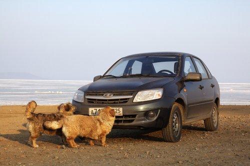 Теперь нам не страшен ущерб, полученный от бродячих собак :)