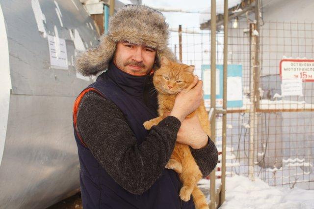 Очаровательный томторский 10-килограммовый котэ