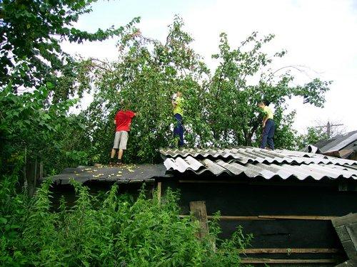 Дети собирают мелкие кислые яблоки.