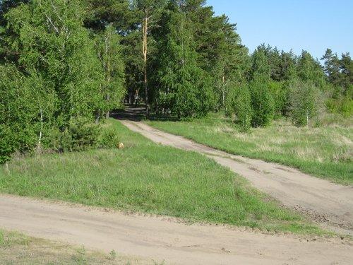 А это уже пейзаж северных областей Казахстана.