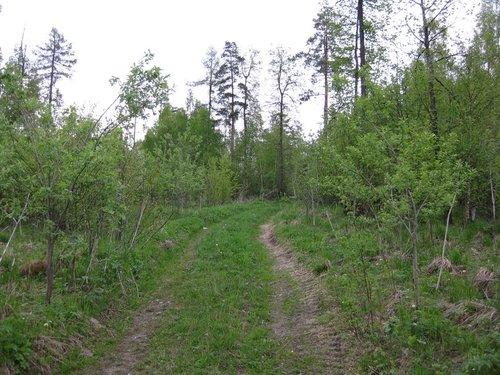 Тропинка в лесу. После 10-минутной прогулки по ней снял с cебя двух клещей. Так что будьте осторожны в лесу и горах, особенно в мае — июне.