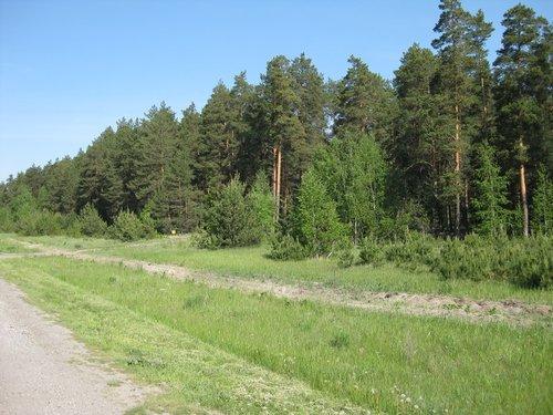 Леса в Тамбовской области.