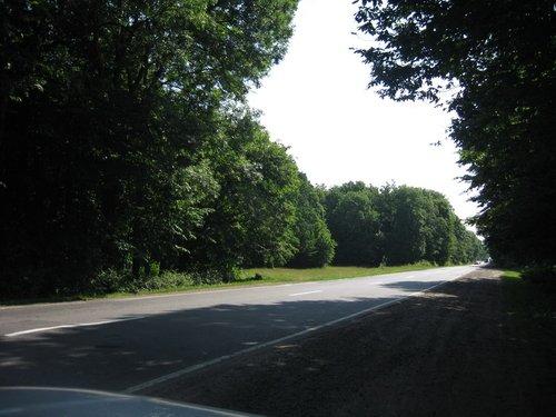 Дорога сквозь лес.