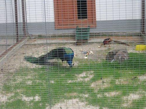 Есть свой небольшой зоопарк.