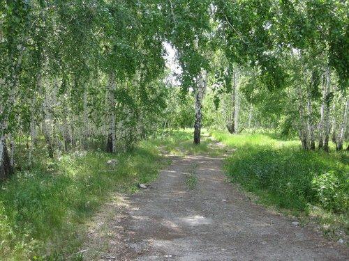 Небольшой привал в берёзовом лесу.