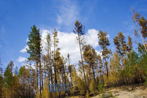 Обидно смотреть на сгоревшие леса…