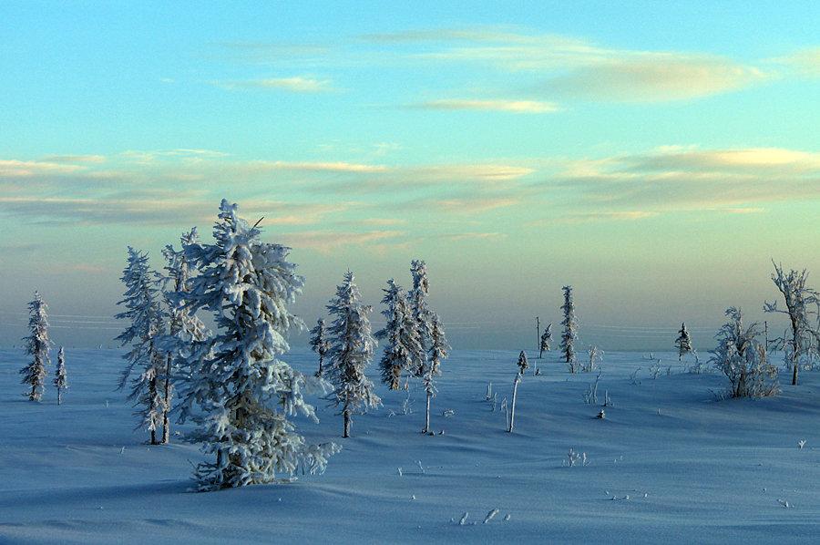 образом крайний север картинка текущем сезоне трусова